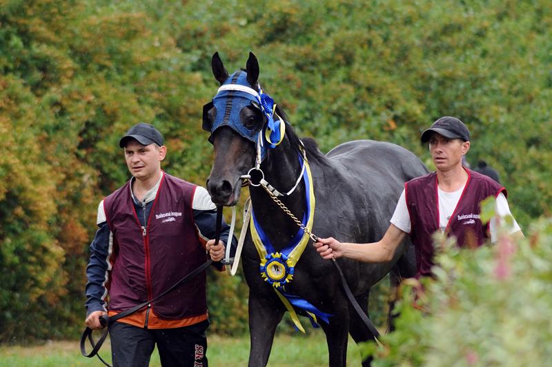 Розетка на лошадь Подкова с нашейной лентой