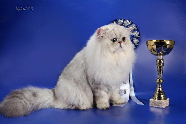Наградная розетка на выставку кошек