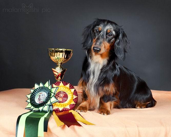 Наградная розетка на выставку собак