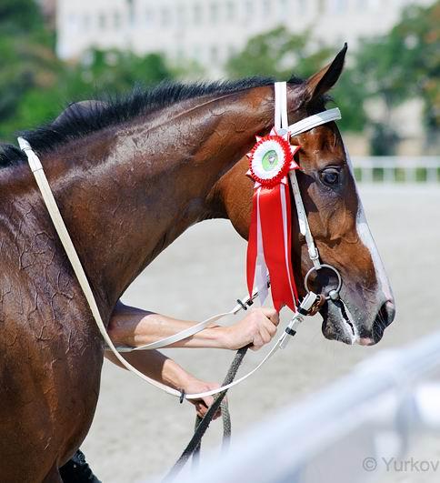 Наградные розетки для лошадей